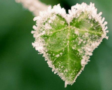 قلب زمستانی